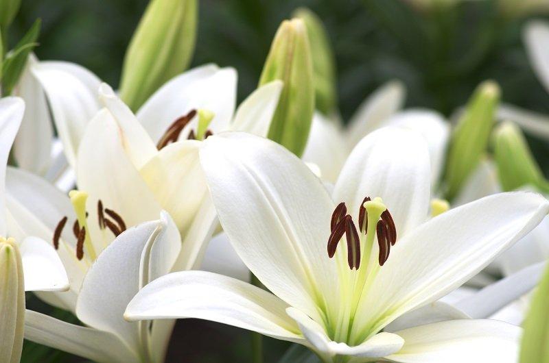 Offre promo ! Fleur-de-Lys